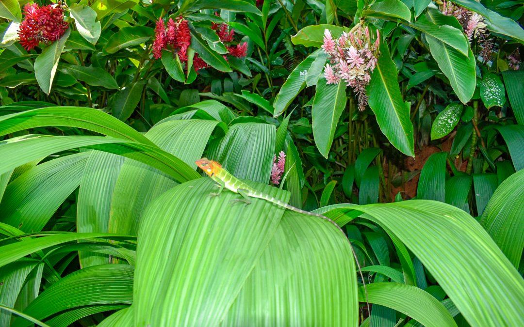 Lumoavaa vihreyttä Sri Lankassa