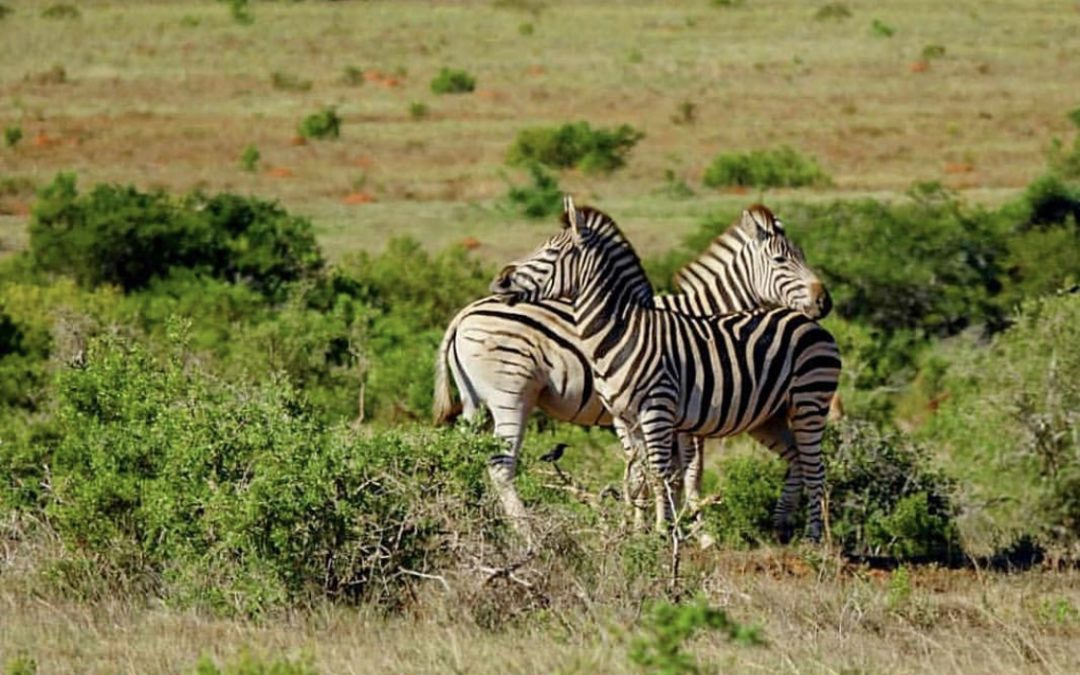 Jännitystä ilmassa – safarille Namibiaan, Botswanaan, Zimbabween ja vähän Sambiaankin